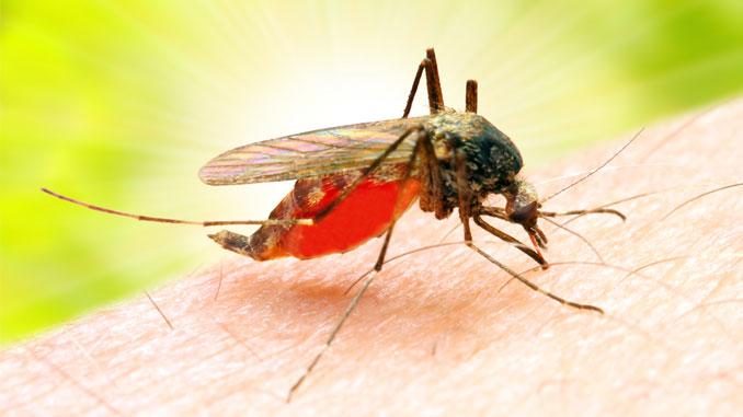 Malaria mag Männer - © Kletr