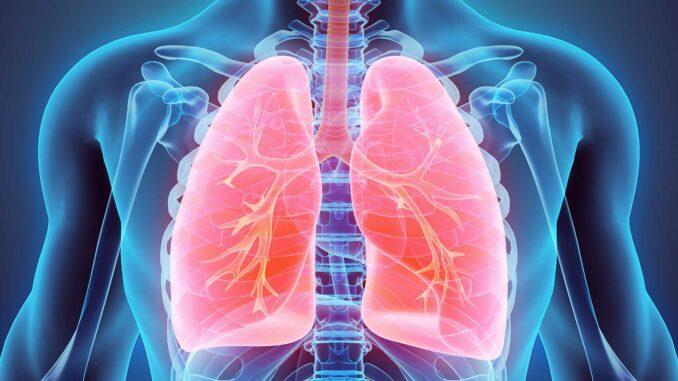 Fakten über die Lunge   © yodiyim - stock.adobe.com